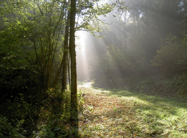 Schöner Deuzer Wald